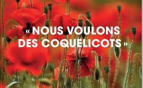 coquelicots.jpg